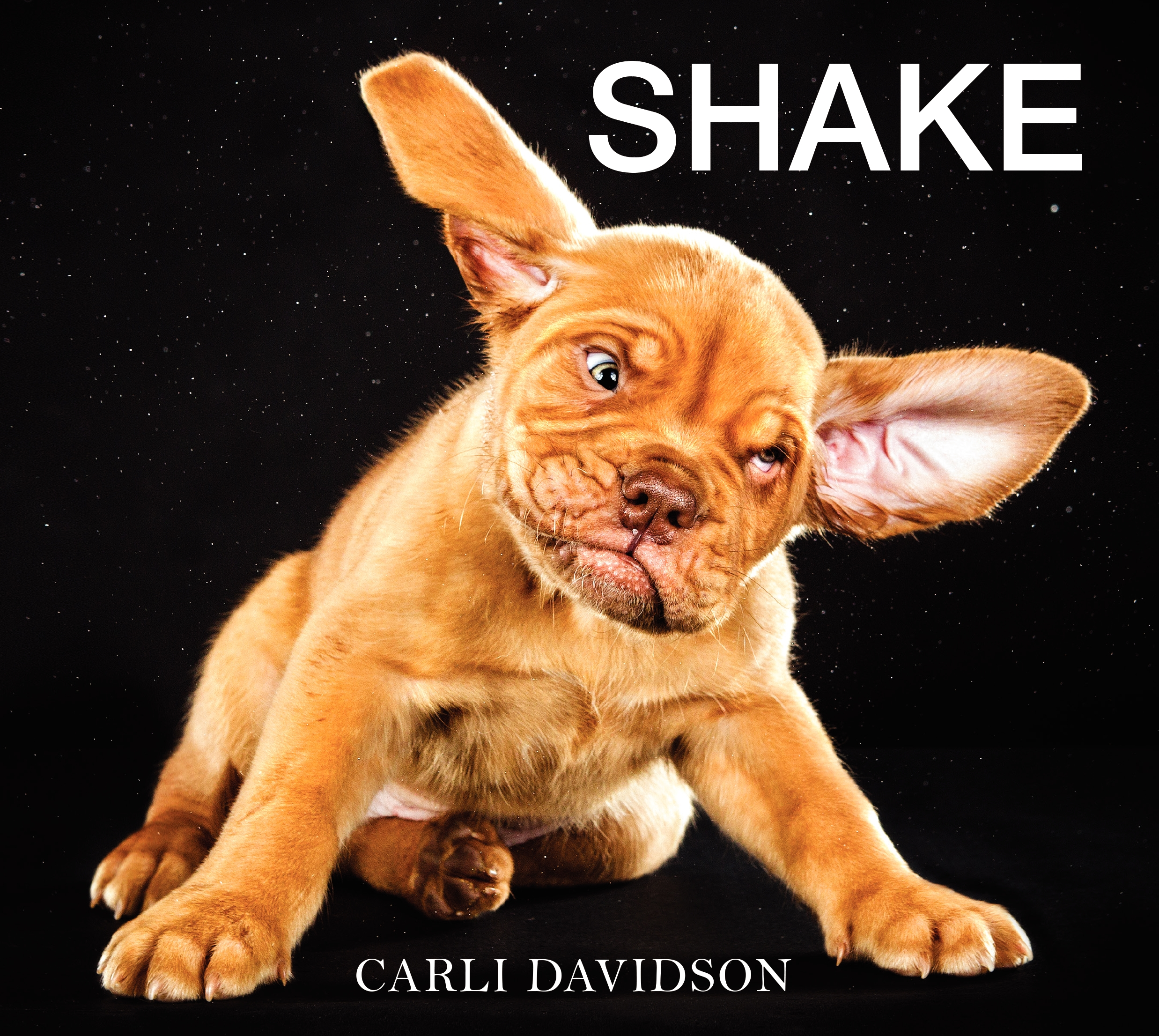 Book Launch: Shake by Carli Davidson